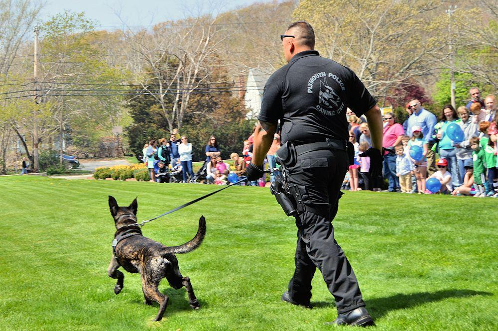K9 Cain and handler Officer Higgins enter the field for a patrol dog demo.