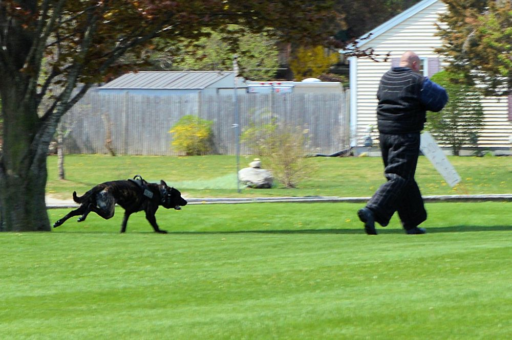 K9 Cain closes in for the hit.
