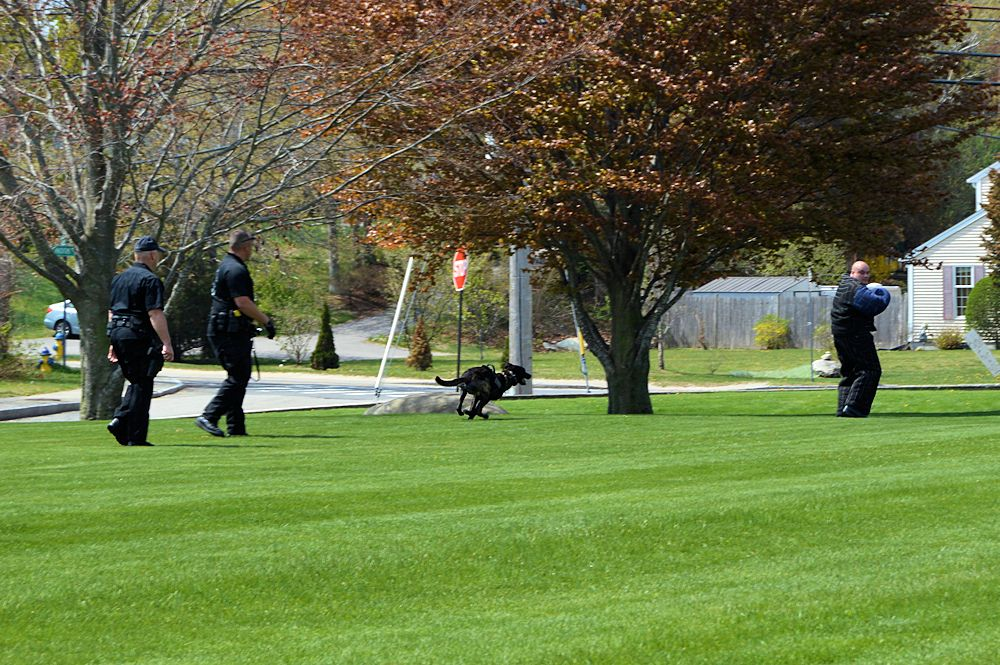 Plymouth Police K9 Cain does an Encore!